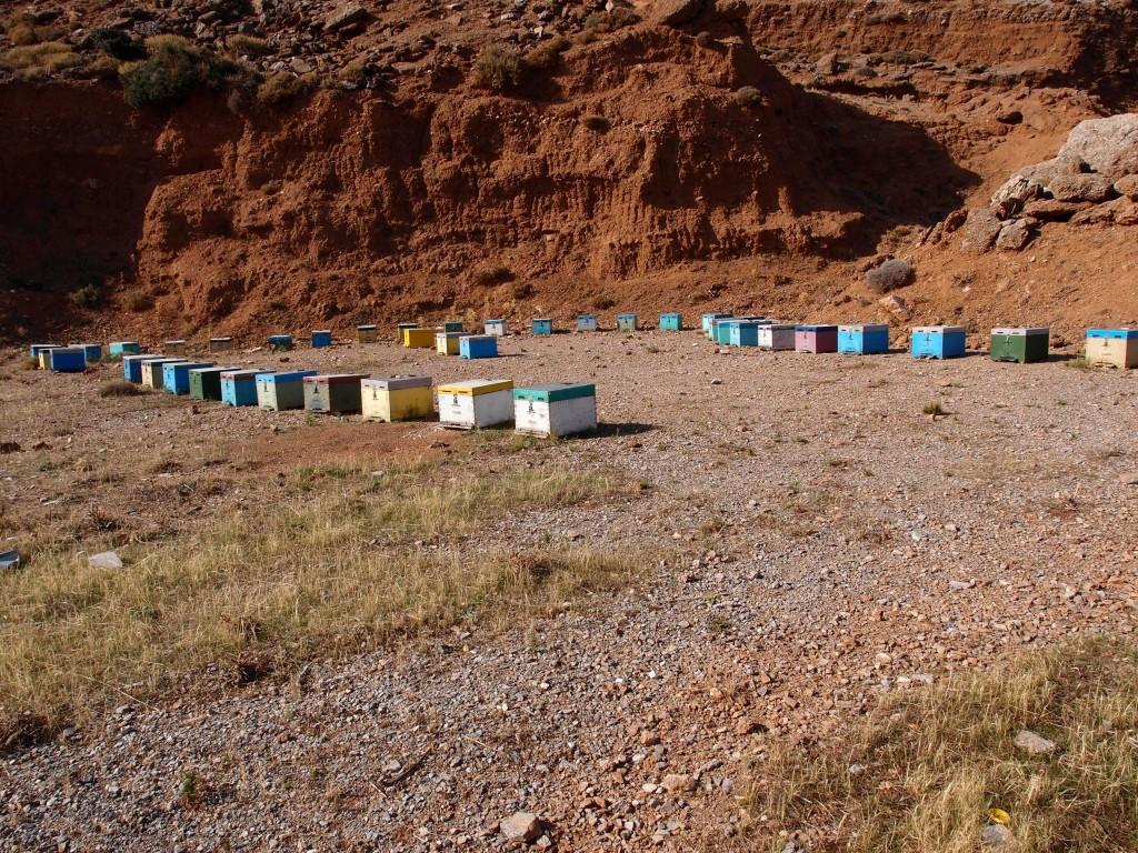 Kreta: Bienenstand am Straßenrand