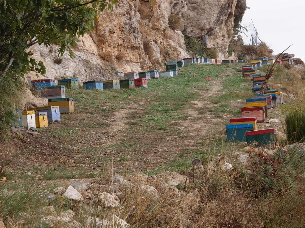 Bienenstand auf Kreta