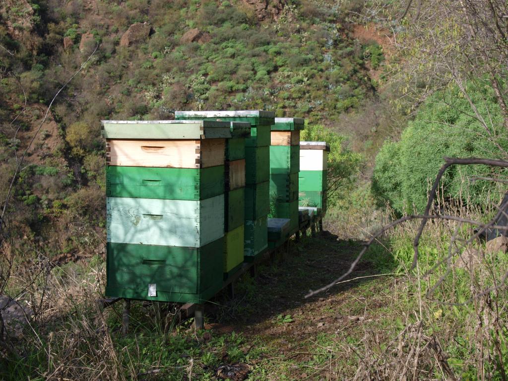 Bienenstand auf Gran Canaria, vermutlich Langstroth